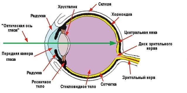 Миопия схема лучей