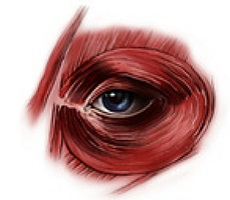 Круговая мышца глаза