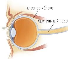 Зрительный нерв глаза